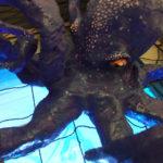 Halloween door octopus close up